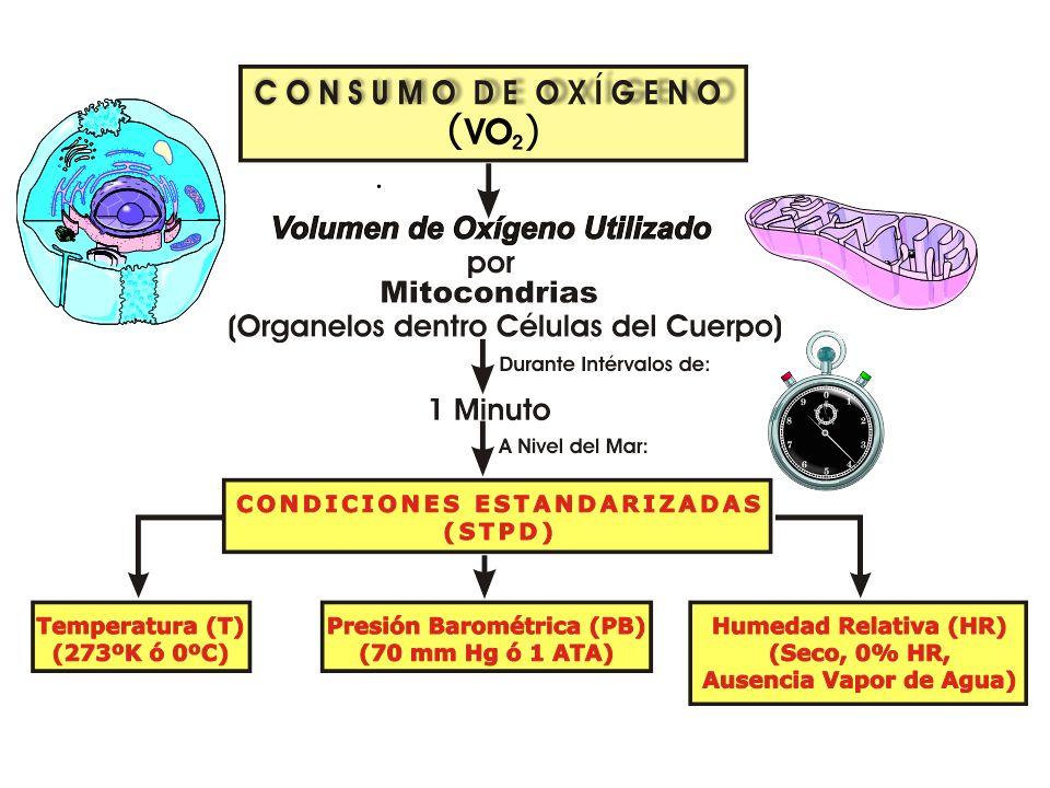 MEDICIÓN DEL INTERCAMBIO RESPIRATORIO DE GASES CONSUMO DE OXÍGENO MÁXIMO (VO 2 máx) CALORIMETRÍA INDIRECTA: Calorímetro Sistema de Espirometría en Cir