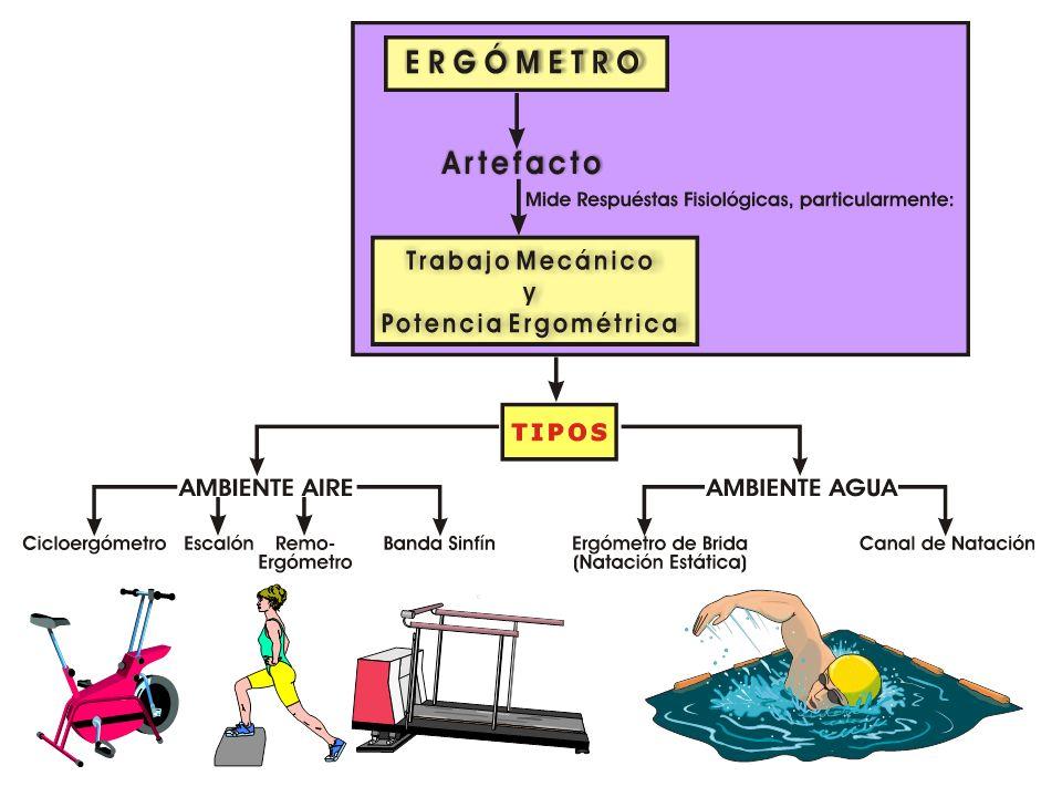 ERGOMETR Í A: Utilización de Ergómetros Cicloergómetros Bandas sinfín ergométricas Escalones/banco Ergómetro de esquí de campo traviesa Remoergómetro