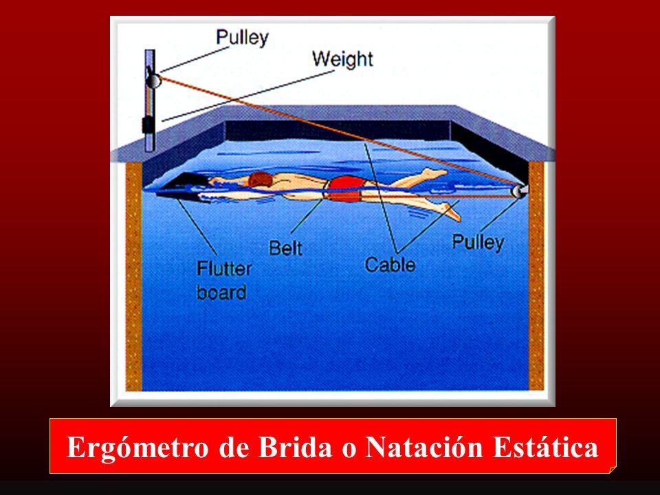ERGOMETR Í A: Utilización de Ergómetros Ergómetro de brida o natación estática (natación sujetada) Canal de natación (piscina con flujo) Piscina ergóm