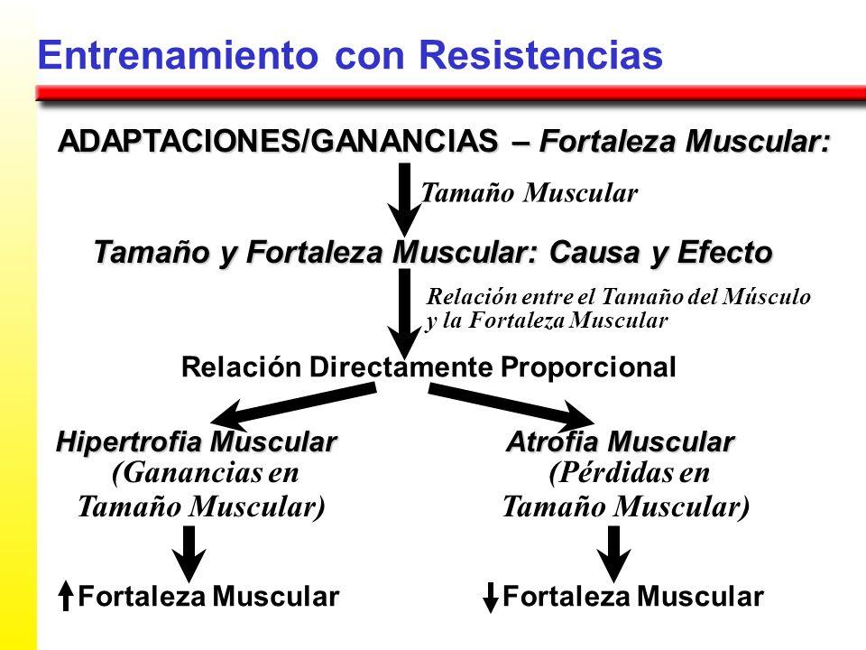 Entrenamiento con Resistencias ADAPTACIONES/GANANCIAS – Fortaleza Muscular: Tamaño y Fortaleza Muscular: Causa y Efecto Tamaño Muscular Relación Direc