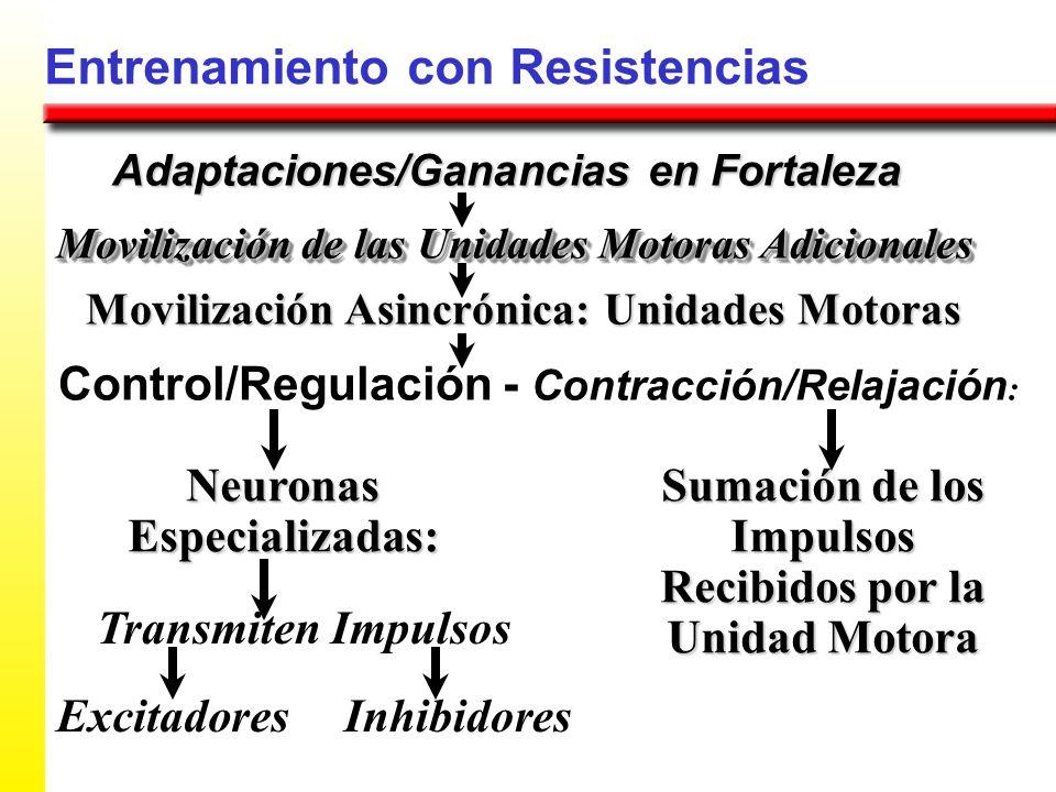 Entrenamiento con Resistencias Adaptaciones/Ganancias en Fortaleza Movilización Asincrónica: Unidades Motoras Movilización de las Unidades Motoras Adi