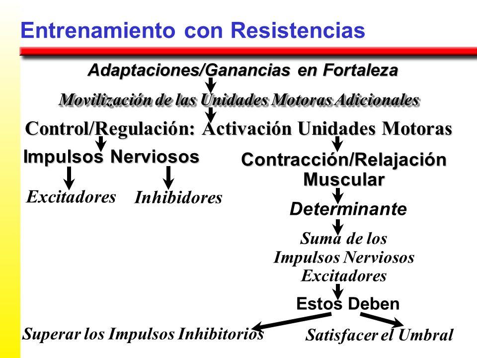 Entrenamiento con Resistencias Adaptaciones/Ganancias en Fortaleza Control/Regulación: Activación Unidades Motoras Movilización de las Unidades Motora