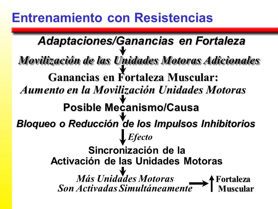 Entrenamiento con Resistencias Adaptaciones/Ganancias en Fortaleza Ganancias en Fortaleza Muscular: Aumento en la Movilización Unidades Motoras Movili