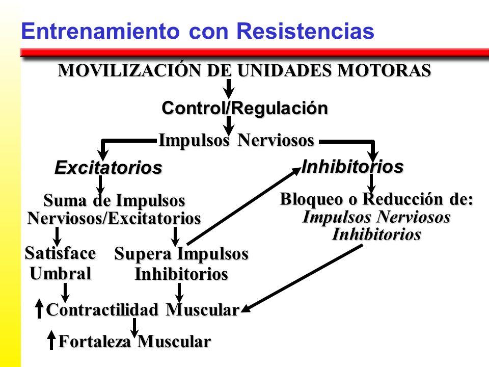 Entrenamiento con Resistencias MOVILIZACIÓN DE UNIDADES MOTORAS Control/Regulación Impulsos Nerviosos Excitatorios Suma de Impulsos Nerviosos/Excitato