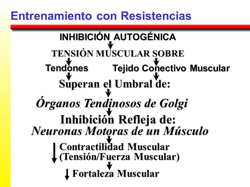 Entrenamiento con Resistencias TENSIÓN MUSCULAR SOBRE Tendones Superan el Umbral de: Órganos Tendinosos de Golgi Inhibición Refleja de: Tejido Conecti