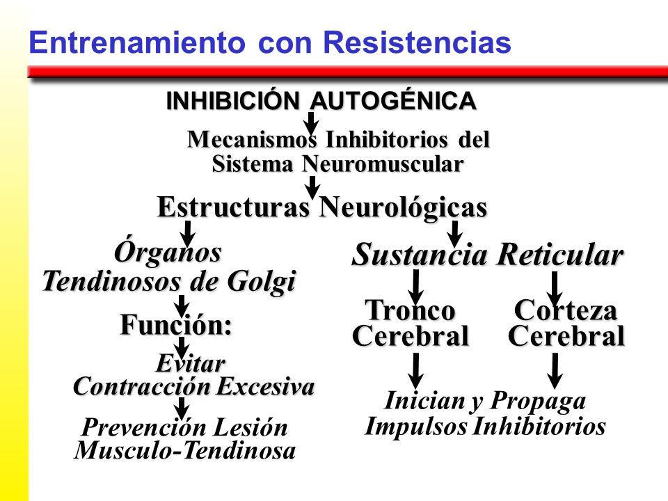 Entrenamiento con Resistencias Mecanismos Inhibitorios del Sistema Neuromuscular Estructuras Neurológicas Órganos Tendinosos de Golgi INHIBICIÓN AUTOG