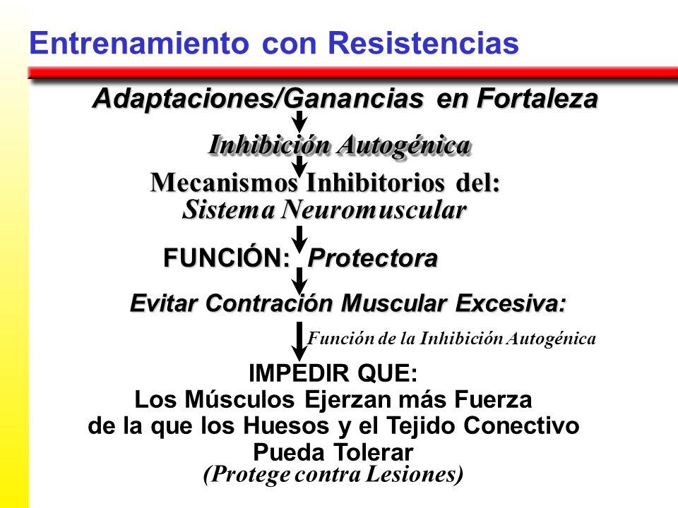 Entrenamiento con Resistencias Adaptaciones/Ganancias en Fortaleza Mecanismos Inhibitorios del: Sistema Neuromuscular Inhibición Autogénica FUNCIÓN: P