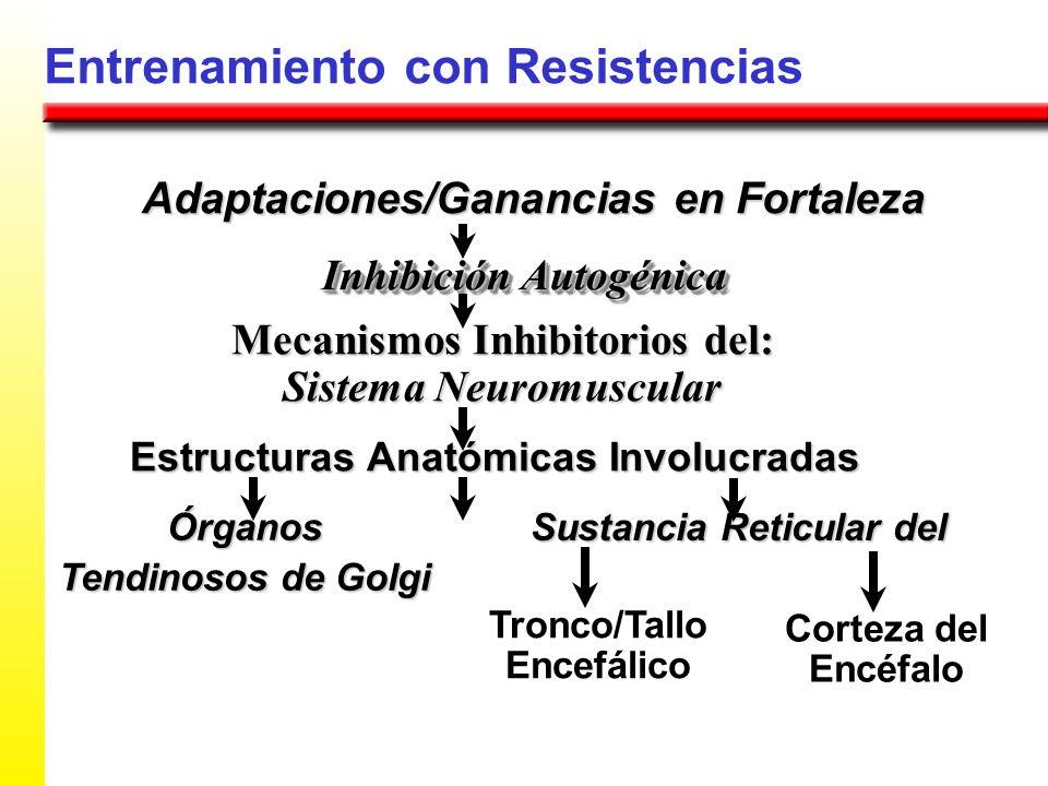 Entrenamiento con Resistencias Adaptaciones/Ganancias en Fortaleza Mecanismos Inhibitorios del: Sistema Neuromuscular Inhibición Autogénica Estructura