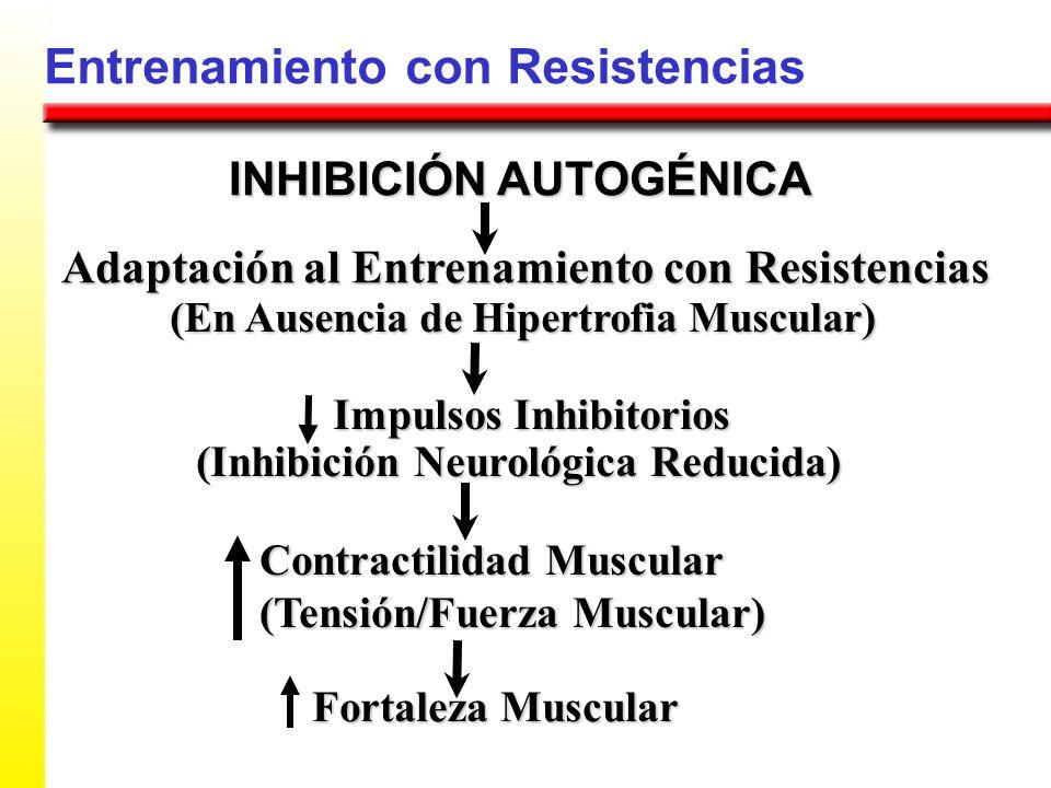 Entrenamiento con Resistencias Adaptación al Entrenamiento con Resistencias INHIBICIÓN AUTOGÉNICA (En Ausencia de Hipertrofia Muscular) Impulsos Inhib