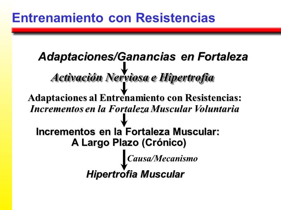 Entrenamiento con Resistencias Adaptaciones/Ganancias en Fortaleza Adaptaciones al Entrenamiento con Resistencias: Incrementos en la Fortaleza Muscula
