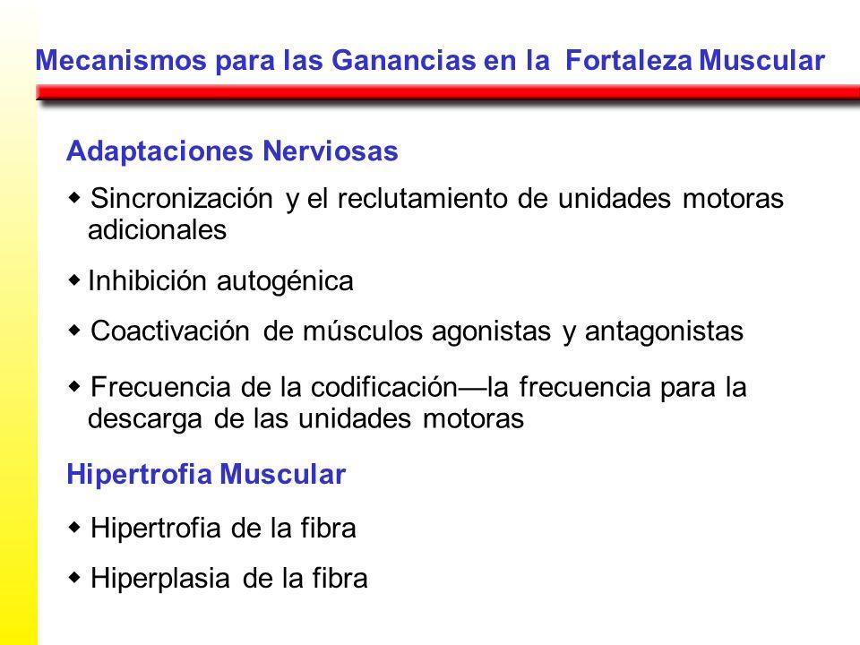 Mecanismos para las Ganancias en la Fortaleza Muscular Adaptaciones Nerviosas Sincronización y el reclutamiento de unidades motoras adicionales Inhibi