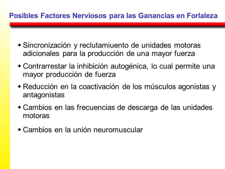 Posibles Factores Nerviosos para las Ganancias en Forlaleza Sincronización y reclutamiuento de unidades motoras adicionales para la producción de una