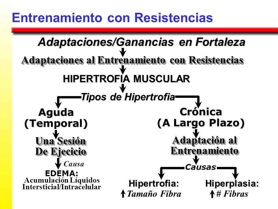 Entrenamiento con Resistencias Adaptaciones/Ganancias en Fortaleza Adaptaciones al Entrenamiento con Resistencias HIPERTROFIA MUSCULAR Tipos de Hipert
