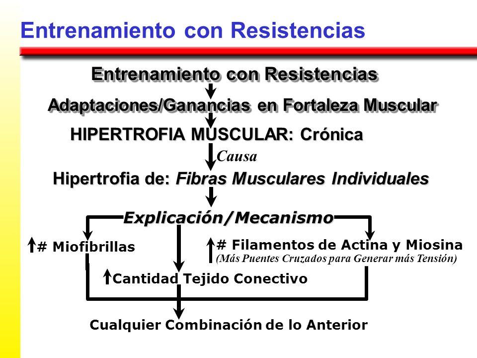 Entrenamiento con Resistencias HIPERTROFIA MUSCULAR: Crónica Hipertrofia de: Fibras Musculares Individuales # Miofibrillas Adaptaciones/Ganancias en F