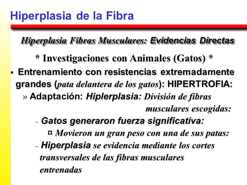Hiperplasia de la Fibra * Investigaciones con Animales (Gatos) * Hiperplasia Fibras Musculares: Evidencias Directas Entrenamiento con resistencias ext