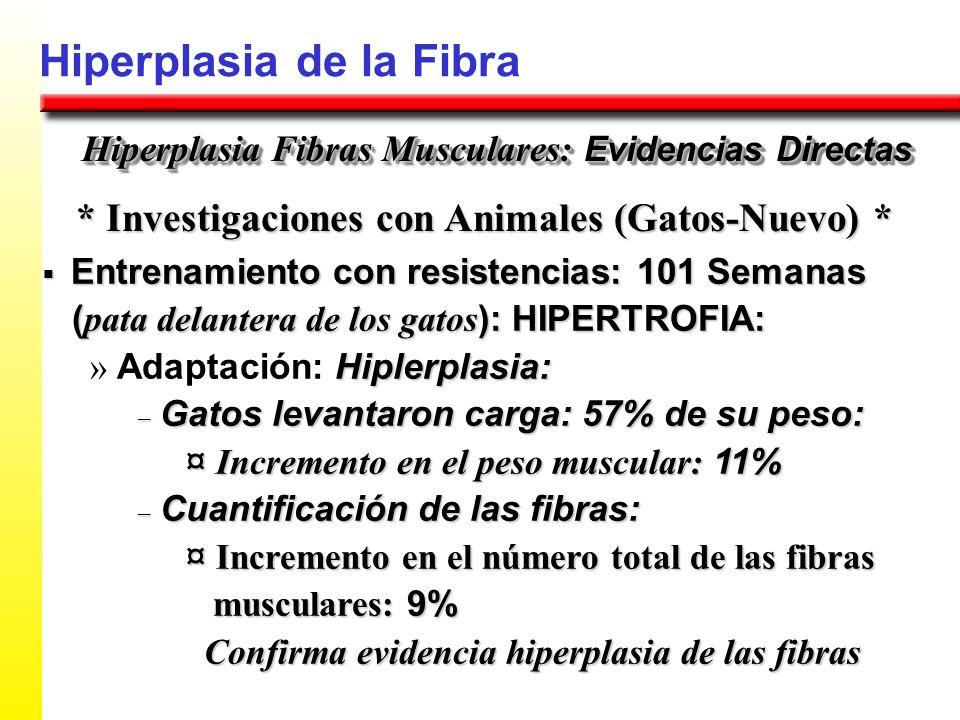 Hiperplasia de la Fibra * Investigaciones con Animales (Gatos-Nuevo) * Hiperplasia Fibras Musculares: Evidencias Directas Entrenamiento con resistenci