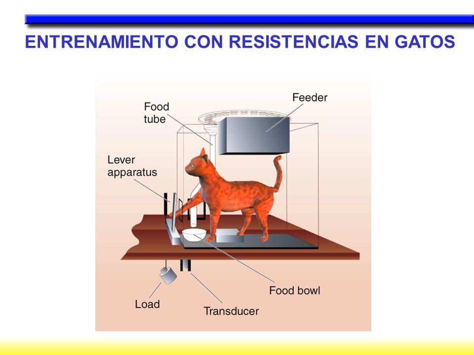 ENTRENAMIENTO CON RESISTENCIAS EN GATOS