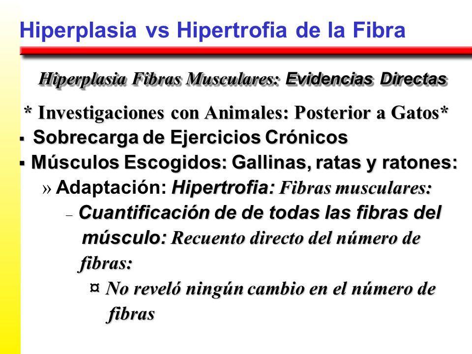 Hiperplasia vs Hipertrofia de la Fibra * Investigaciones con Animales: Posterior a Gatos* Hiperplasia Fibras Musculares: Evidencias Directas Sobrecarg