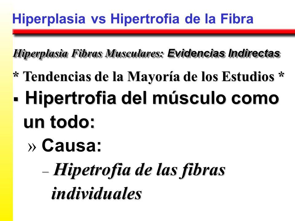 Hiperplasia vs Hipertrofia de la Fibra * Tendencias de la Mayoría de los Estudios * Hiperplasia Fibras Musculares: Evidencias Indirectas Hipertrofia d