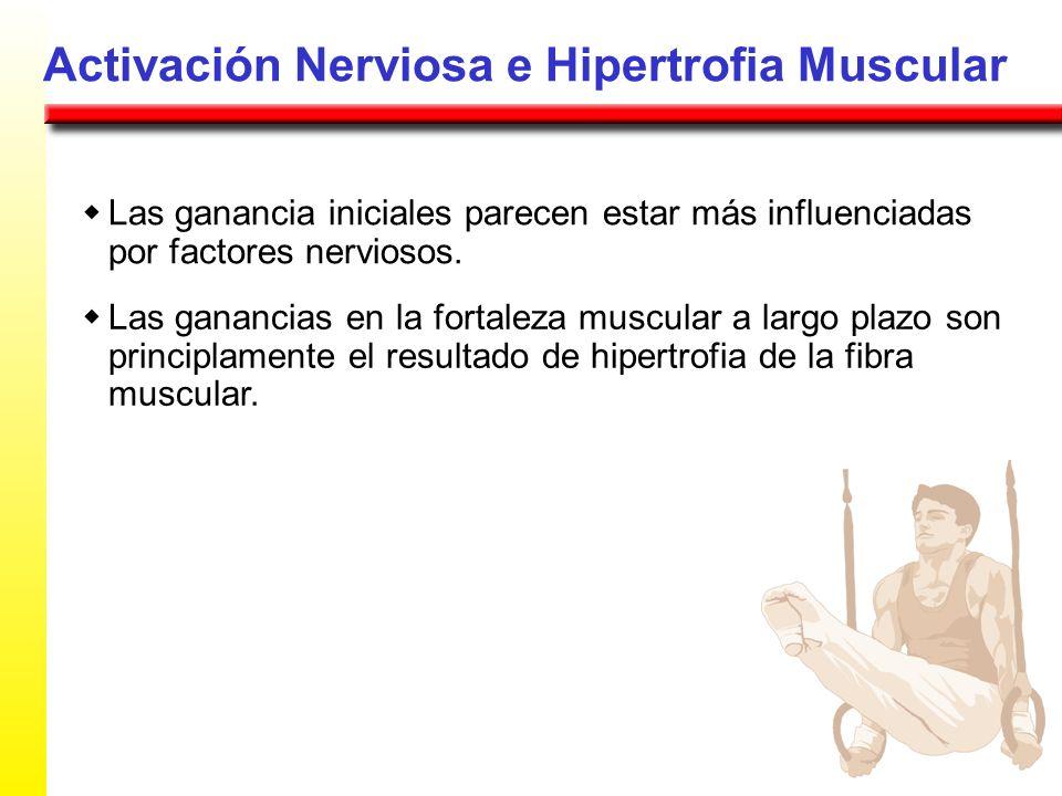 Activación Nerviosa e Hipertrofia Muscular Las ganancia iniciales parecen estar más influenciadas por factores nerviosos. Las ganancias en la fortalez