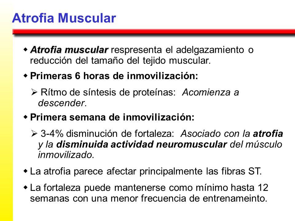 Atrofia Muscular Atrofia muscular Atrofia muscular respresenta el adelgazamiento o reducción del tamaño del tejido muscular. Primeras 6 horas de inmov