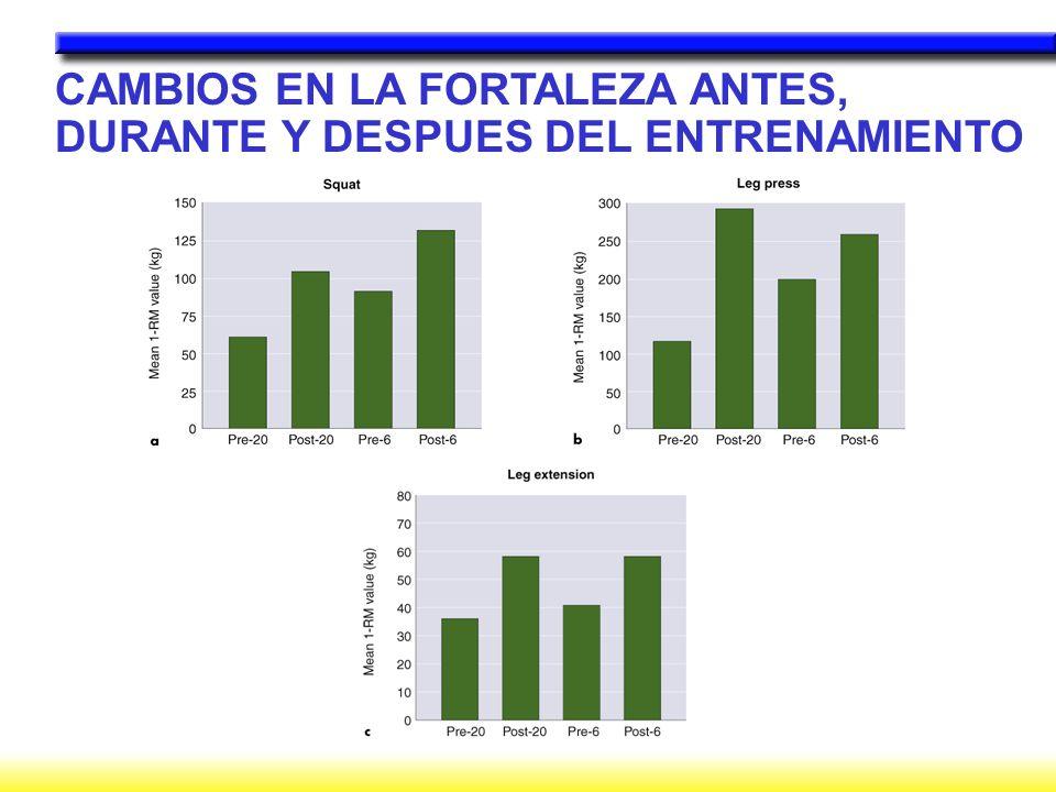 CAMBIOS EN LA FORTALEZA ANTES, DURANTE Y DESPUES DEL ENTRENAMIENTO