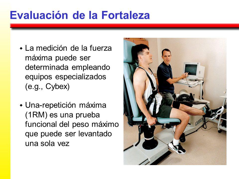 Evaluación de la Fortaleza La medición de la fuerza máxima puede ser determinada empleando equipos especializados (e.g., Cybex) Una-repetición máxima