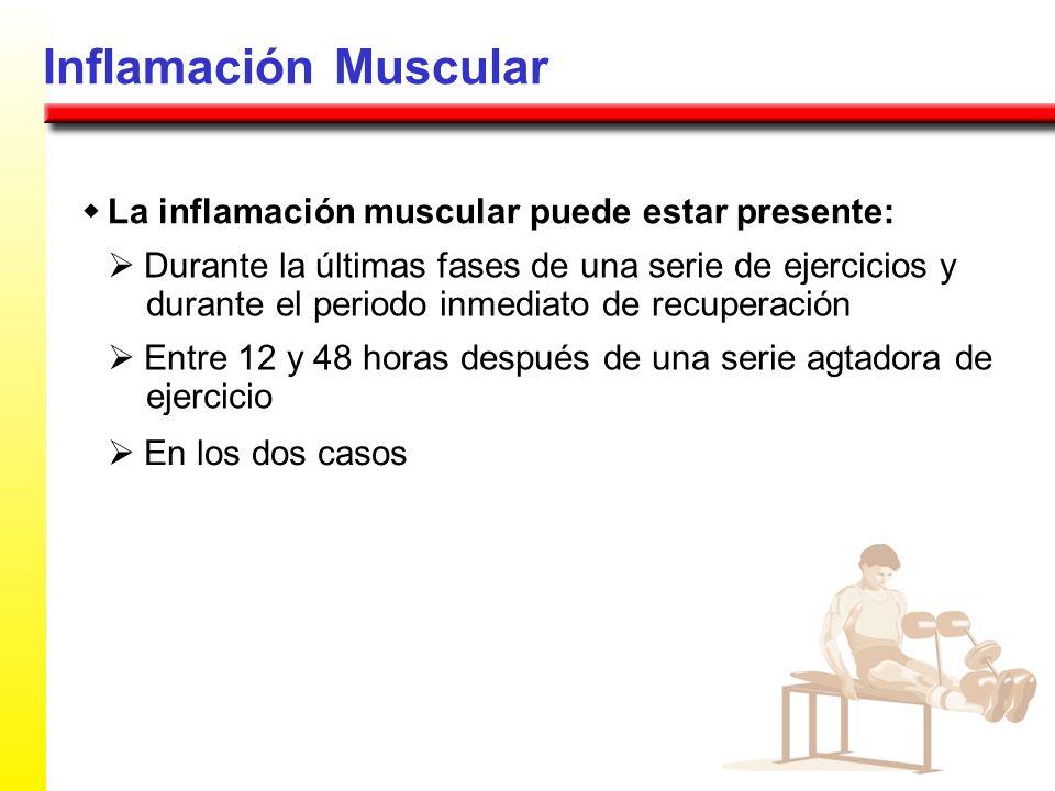 Inflamación Muscular La inflamación muscular puede estar presente: Durante la últimas fases de una serie de ejercicios y durante el periodo inmediato