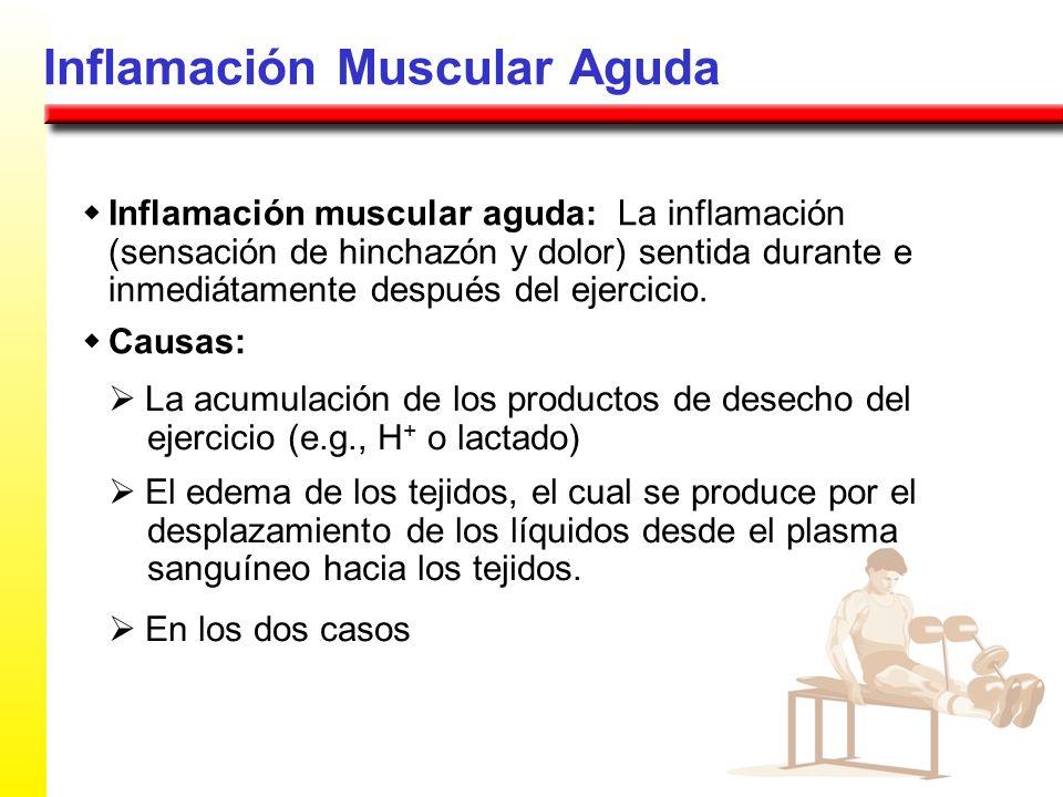 Inflamación Muscular Aguda Inflamación muscular aguda: La inflamación (sensación de hinchazón y dolor) sentida durante e inmediátamente después del ej
