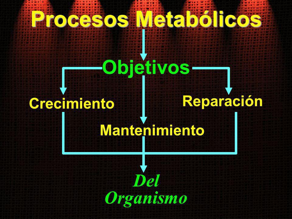 Procesos Metabólicos Objetivos Del Organismo Mantenimiento Reparación Crecimiento