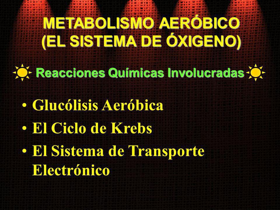 METABOLISMO AERÓBICO (EL SISTEMA DE ÓXIGENO) Glucólisis Aeróbica El Ciclo de Krebs El Sistema de Transporte Electrónico Reacciones Químicas Involucrad