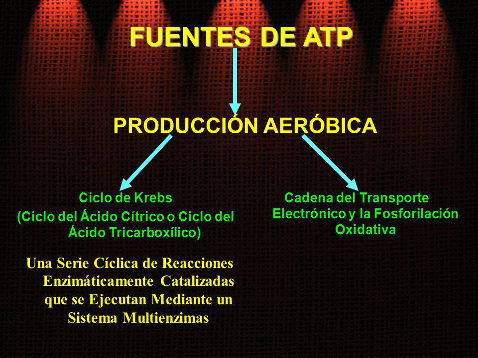 FUENTES DE ATP Ciclo de Krebs (Ciclo del Ácido Cítrico o Ciclo del Ácido Tricarboxílico) Una Serie Cíclica de Reacciones Enzimáticamente Catalizadas q