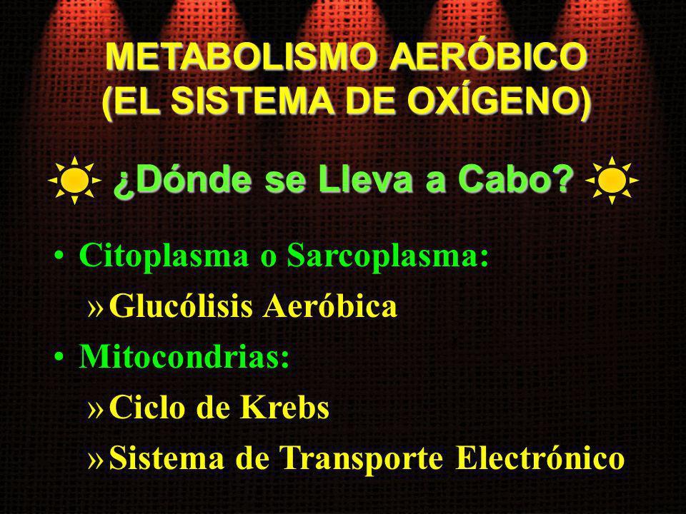 METABOLISMO AERÓBICO (EL SISTEMA DE OXÍGENO) Citoplasma o Sarcoplasma: »Glucólisis Aeróbica Mitocondrias: »Ciclo de Krebs »Sistema de Transporte Elect