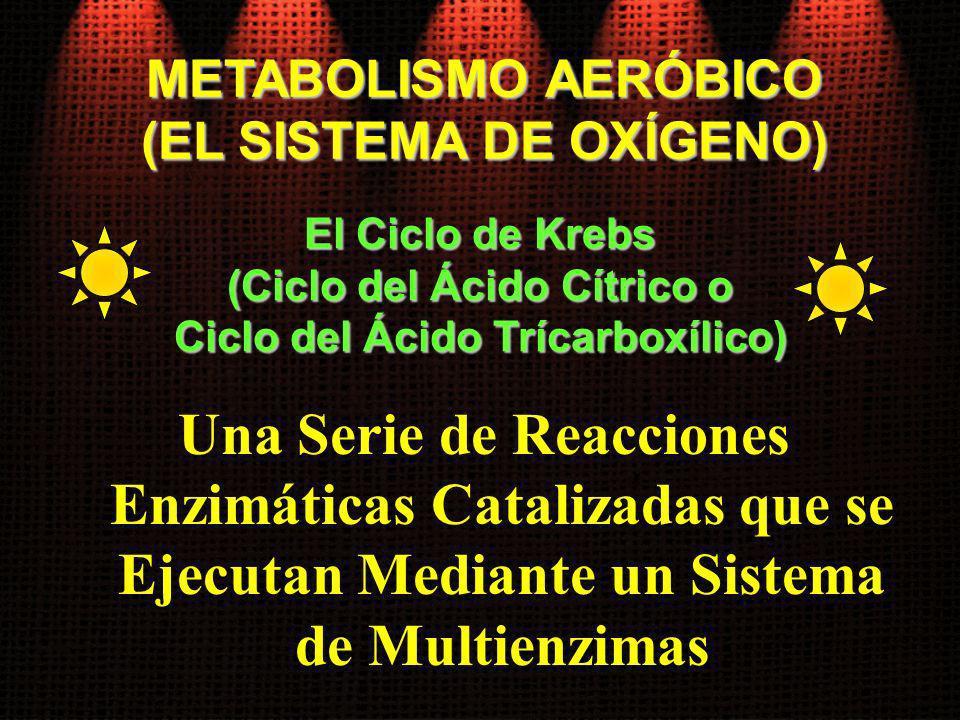 Una Serie de Reacciones Enzimáticas Catalizadas que se Ejecutan Mediante un Sistema de Multienzimas El Ciclo de Krebs (Ciclo del Ácido Cítrico o Ciclo