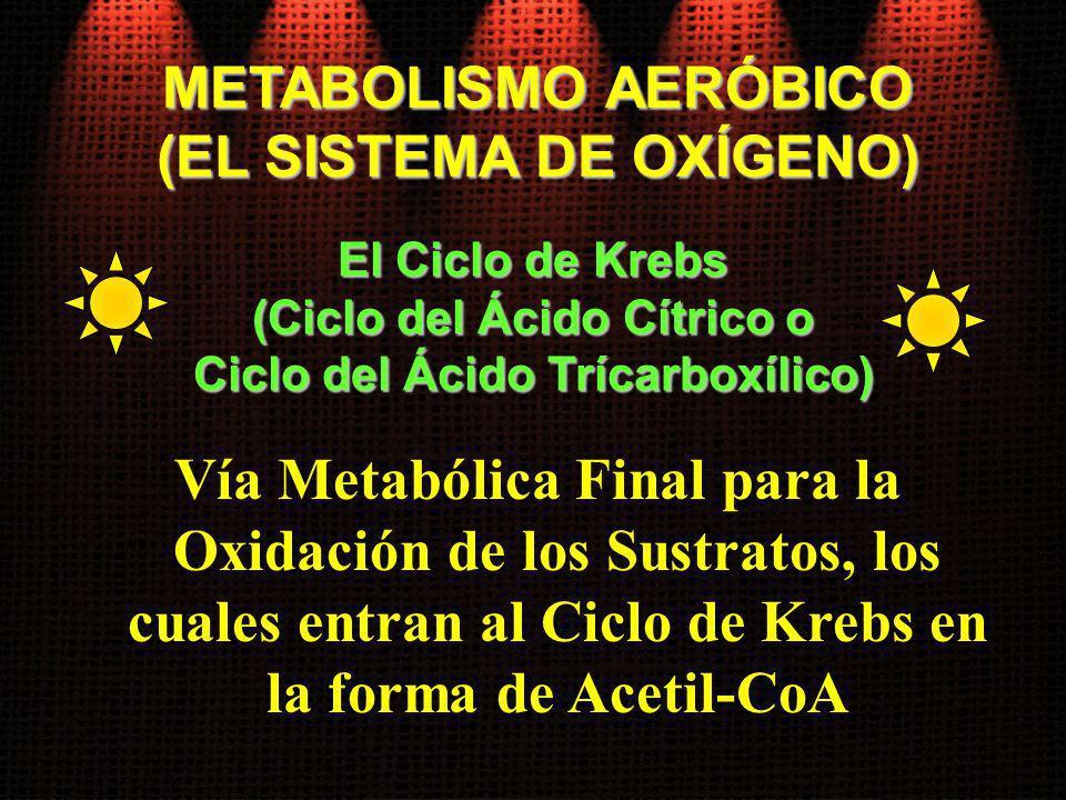 Vía Metabólica Final para la Oxidación de los Sustratos, los cuales entran al Ciclo de Krebs en la forma de Acetil-CoA El Ciclo de Krebs (Ciclo del Ác
