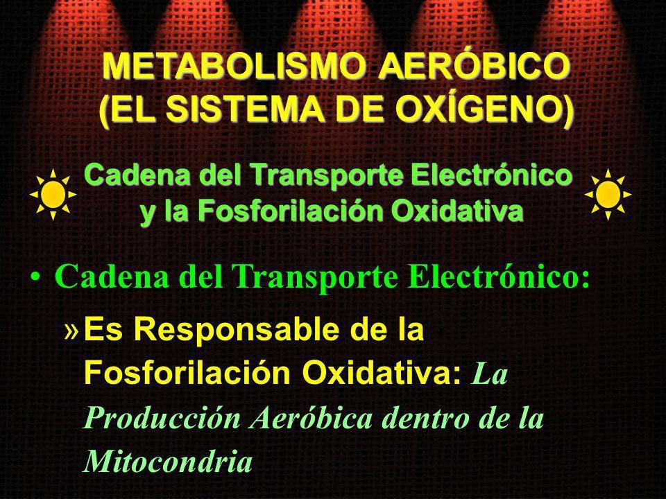 Cadena del Transporte Electrónico: »Es Responsable de la Fosforilación Oxidativa: La Producción Aeróbica dentro de la Mitocondria Cadena del Transport