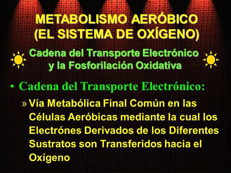 Cadena del Transporte Electrónico: »Vía Metabólica Final Común en las Células Aeróbicas mediante la cual los Electrónes Derivados de los Diferentes Su