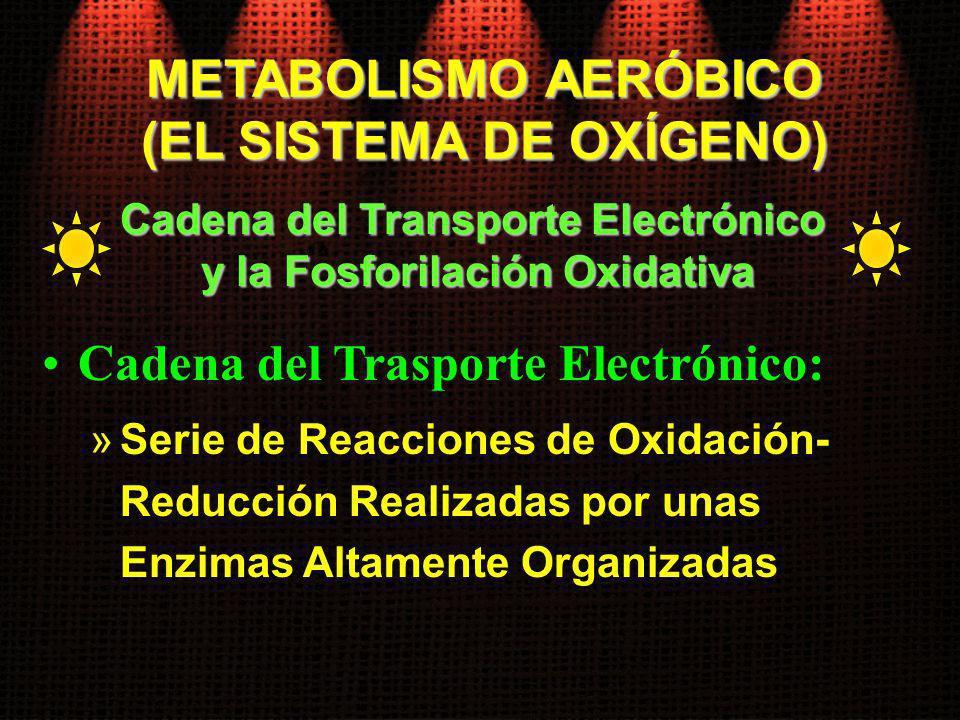 Cadena del Trasporte Electrónico: »Serie de Reacciones de Oxidación- Reducción Realizadas por unas Enzimas Altamente Organizadas Cadena del Transporte