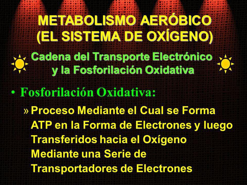 Fosforilación Oxidativa: »Proceso Mediante el Cual se Forma ATP en la Forma de Electrones y luego Transferidos hacia el Oxígeno Mediante una Serie de