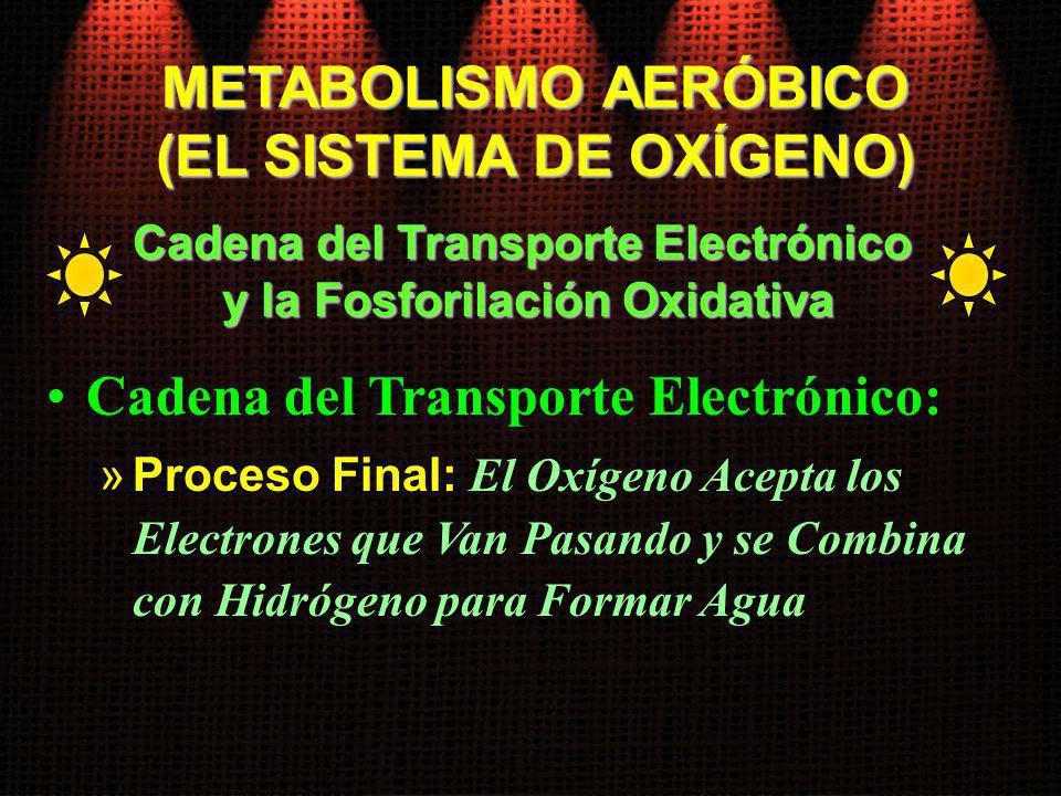 Cadena del Transporte Electrónico: »Proceso Final: El Oxígeno Acepta los Electrones que Van Pasando y se Combina con Hidrógeno para Formar Agua Cadena