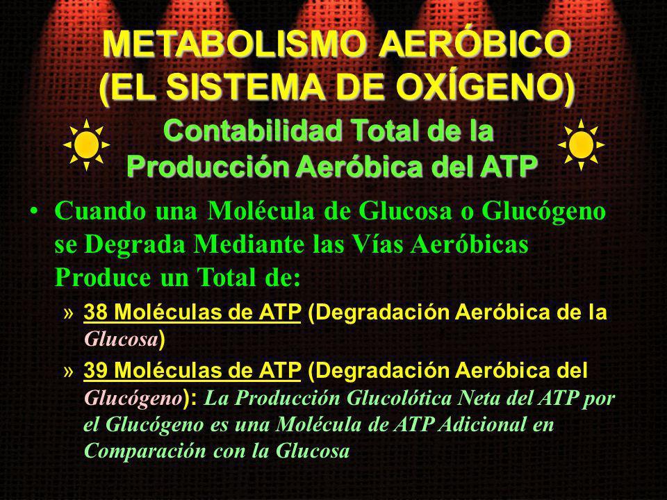 Cuando una Molécula de Glucosa o Glucógeno se Degrada Mediante las Vías Aeróbicas Produce un Total de: »38 Moléculas de ATP (Degradación Aeróbica de l