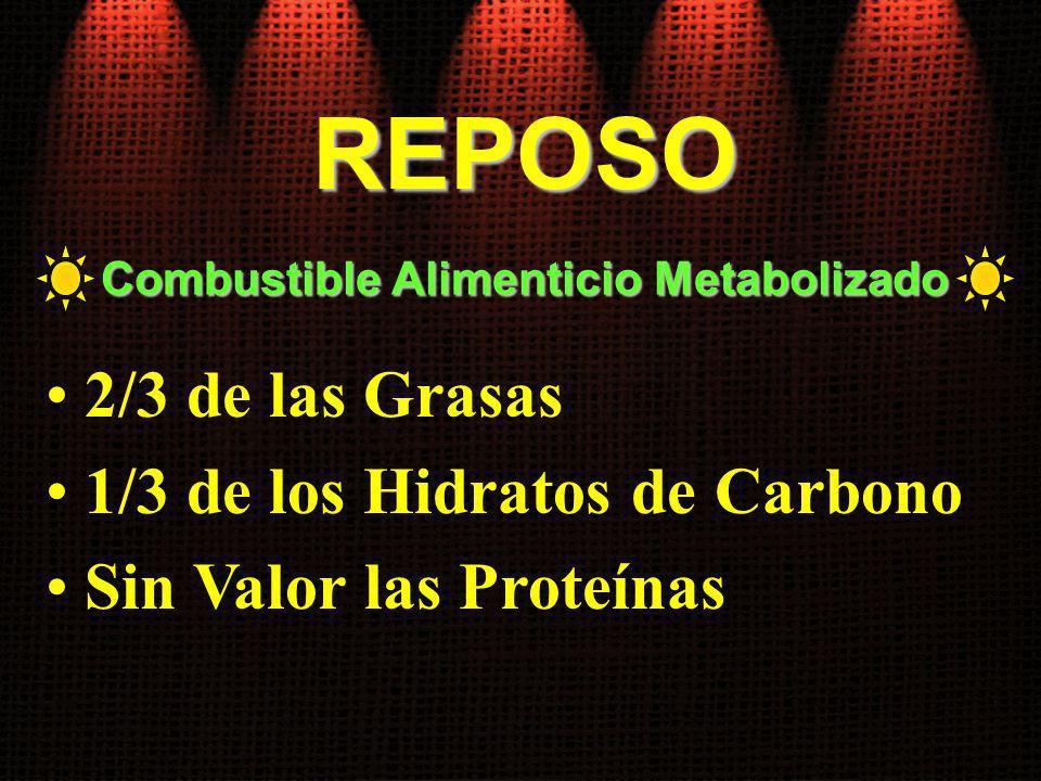 2/3 de las Grasas 1/3 de los Hidratos de Carbono Sin Valor las Proteínas Combustible Alimenticio Metabolizado REPOSO