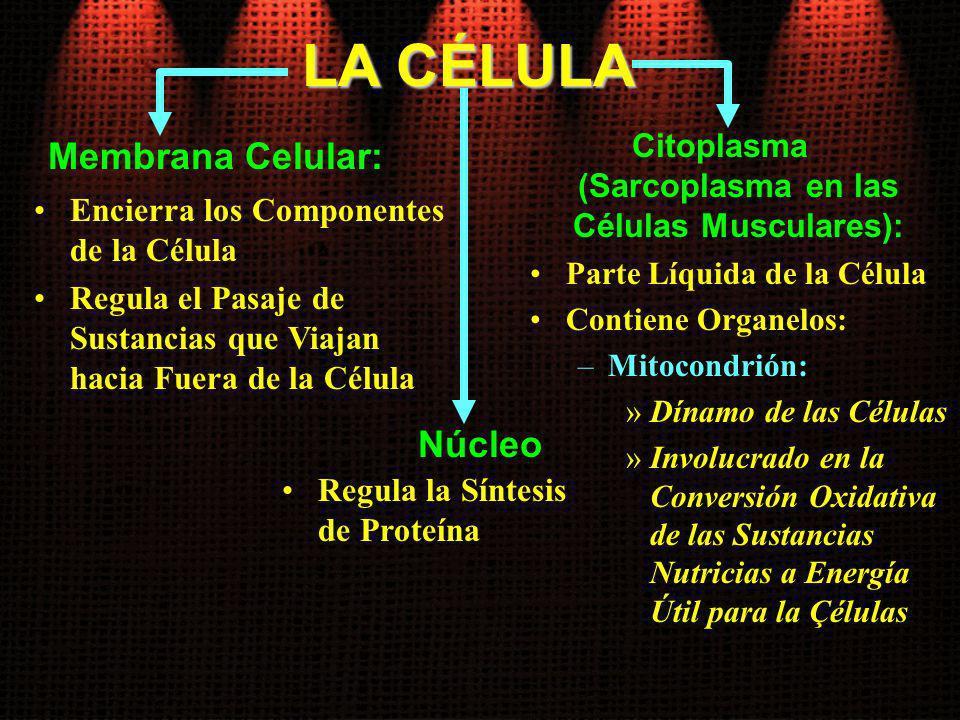 LA CÉLULA Membrana Celular: Encierra los Componentes de la Célula Regula el Pasaje de Sustancias que Viajan hacia Fuera de la Célula Citoplasma (Sarco
