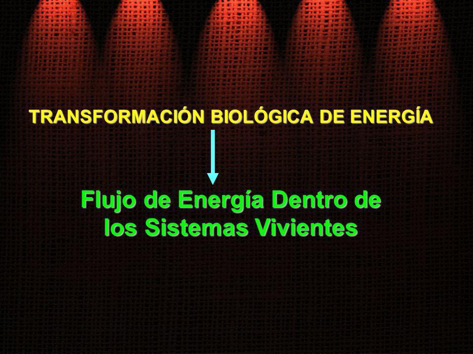TRANSFORMACIÓN BIOLÓGICA DE ENERGÍA Flujo de Energía Dentro de los Sistemas Vivientes