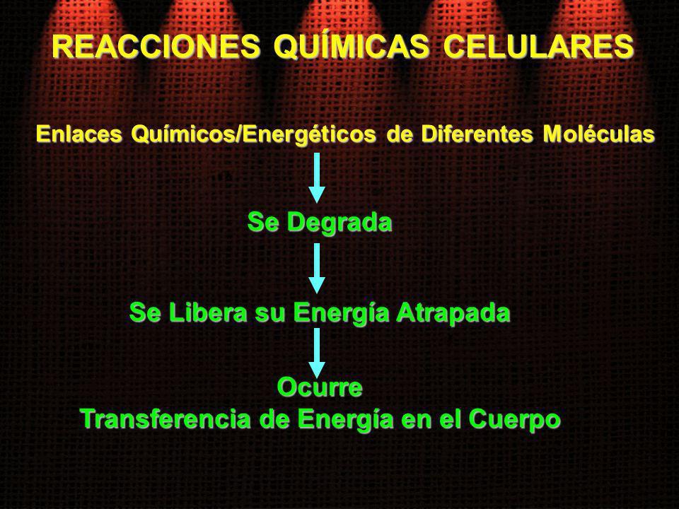 Enlaces Químicos/Energéticos de Diferentes Moléculas Se Degrada REACCIONES QUÍMICAS CELULARES Se Libera su Energía Atrapada Ocurre Transferencia de En