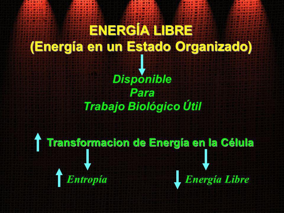 Disponible Para Trabajo Biológico Útil ENERGÍA LIBRE (Energía en un Estado Organizado) Transformacion de Energía en la Célula EntropíaEnergía Libre