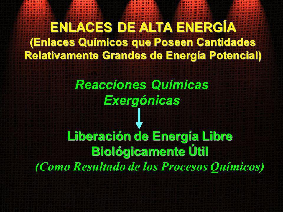Reacciones Químicas Exergónicas ENLACES DE ALTA ENERGÍA (Enlaces Químicos que Poseen Cantidades Relativamente Grandes de Energía Potencial) Liberación