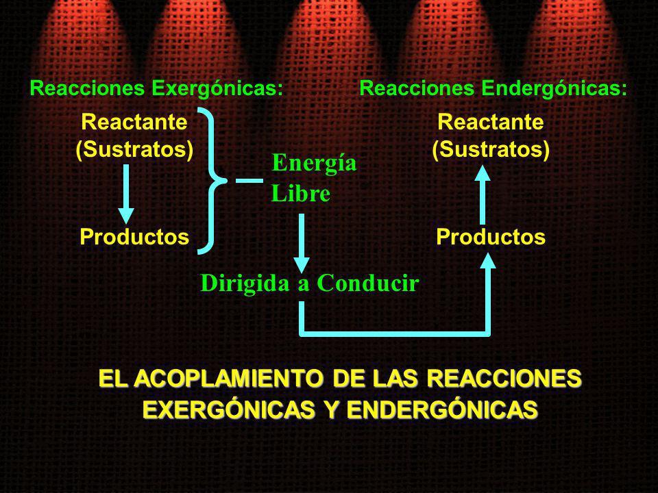 Reacciones Exergónicas: Reactante (Sustratos) Dirigida a Conducir Reacciones Endergónicas: Productos Energía Libre Reactante (Sustratos) Productos EL