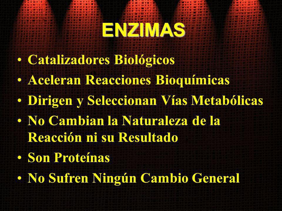 ENZIMAS Catalizadores Biológicos Aceleran Reacciones Bioquímicas Dirigen y Seleccionan Vías Metabólicas No Cambian la Naturaleza de la Reacción ni su