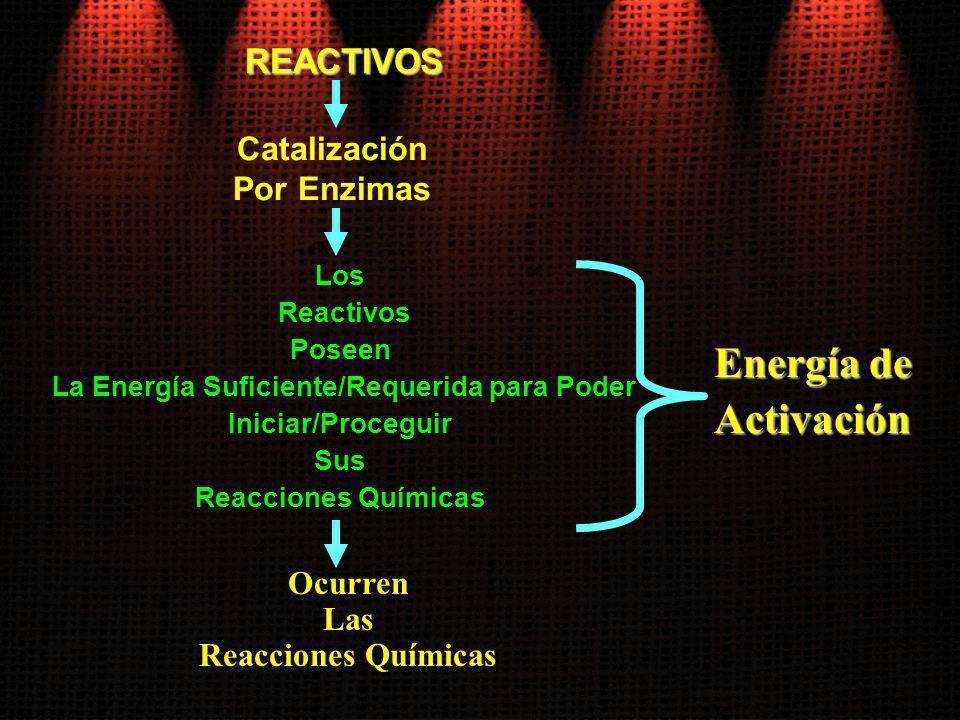 REACTIVOS Los Reactivos Poseen La Energía Suficiente/Requerida para Poder Iniciar/Proceguir Sus Reacciones Químicas Catalización Por Enzimas Ocurren L